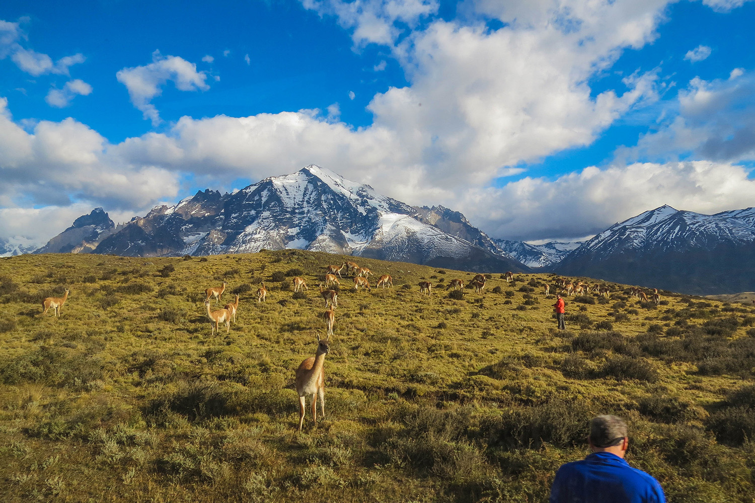 tours and travel in chile, Torres del Paine, 15